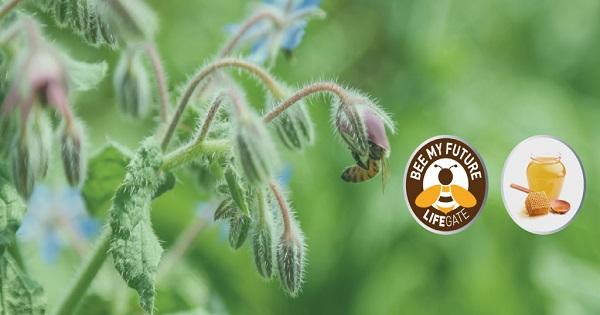 Hello Bank! difende le api con Bee My Future