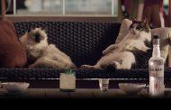 Nuovi spot di Sambuca Molinari con testimonial... i gatti