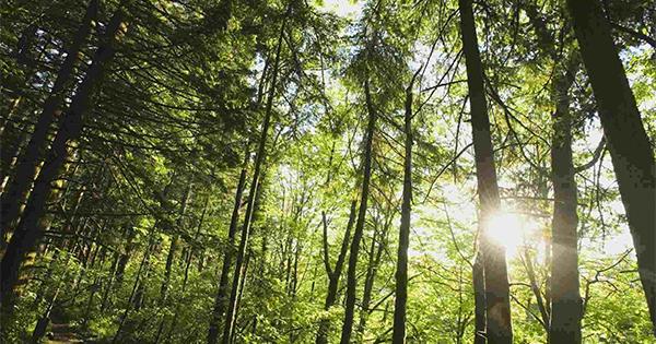 #unalberoè, l'iniziativa social per celebrare l'importanza degli alberi e riforestare le aree più bisognose