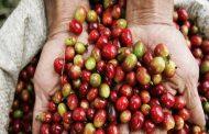 Nespresso annuncia nuovi investimenti per la produzione del caffè nella Colombia post-conflitto