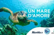 A San Valentino regala una tartaruga marina: Legambiente e Mareblu insieme per l'iniziativa TartaLove