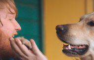 Burger King realizza i desideri di un fan grazie al cane Flynn