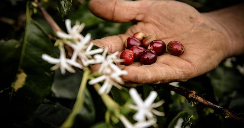 Al via l'iniziativa di sensibilizzazione sulla filiera responsabile di Nespresso
