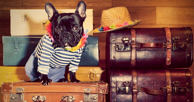 Animali in vacanza: tendenze e consigli per viaggi su misura per cani e gatti