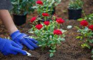 Il 12 marzo pianta un fiore: è il Plant-a-Flower Day
