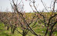 ENGIE 4LIFE, il frutteto biologico e sostenibile