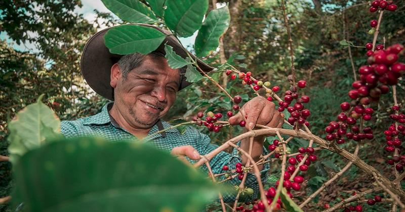 Treedom festeggia La Giornata Mondiale dell'Ambiente con 2 milioni di alberi piantati