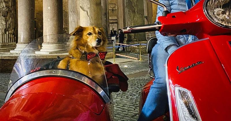 Cinque incredibili esperienze da fare con il vostro cane
